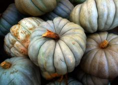 Jeradel  pumpkins are gorgeous! We grow these at Bates Nut Farm, they are one of my favorites