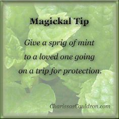 Magical Tip - Mint
