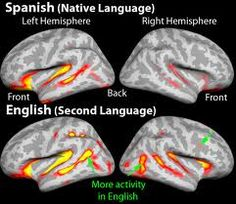 bilinguals compared to monolinguals essay More than half the world's population is now bilingual  the sunday essay  in  bilinguals (on average at 786 years old, compared to 754 years for  in each  language is generally less than that of monolingual speakers the.