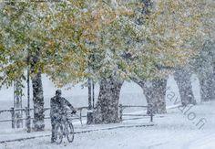 Ensilumi Aurajoella - ensilumi lumi puut ruska syksy lehdet katu polkupyörä