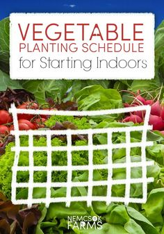 vegetable planting schedule - starting indoors