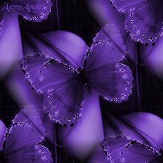 Animated Flowers and Butterflies | Purple Butterflies,Animated - butterflies Photo