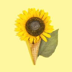 Photo by Amy Shamblen on Unsplash Essential Oil Case, Essential Oil Storage, Gold Glitter Background, Textured Background, Les Microbes, Painting Textured Walls, Images Of Summer, Colorful Ice Cream, Tropical