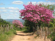 ipe paisagem Landscape Art, Landscape Paintings, Landscape Photography, Deer Pictures, Nature Pictures, Country Backgrounds, Caribbean Art, Forest Path, Modern Landscaping