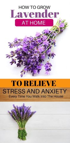 How To Grow Lavender At Home To Relieve Stress And Anxiety Every Time You Walk Into The House