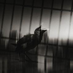 by Qin Yong Jun