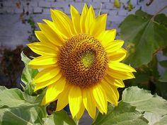 So beaitiful flower