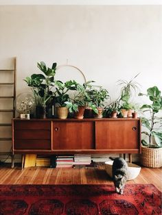 my scandinavian home: Plants and a credenza in Theo's Charming, Bohemian-style Abode in Berlin
