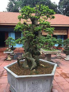 Bonsai Styles, Illusion Art, Illusions, Trees, Yard, Plants, Patio, Tree Structure, Plant