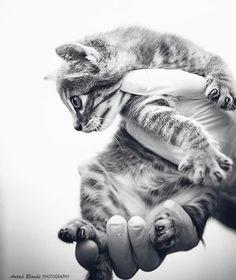 En tus manos - antua blonde photography -  fotógrafo solidario - barcelona - animal - fotos - reportajes - animal de compañía - maresme - cat - gat - gato - dog - gos - perro