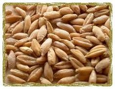 Triticale (organic) Organic sprouting seeds, triticale seeds