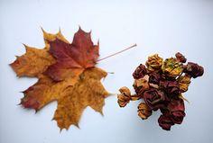 Květy růže v podzimním kabátu (tip na dekoraci)