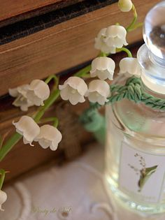 lily of the valley flowers and eau de toilette