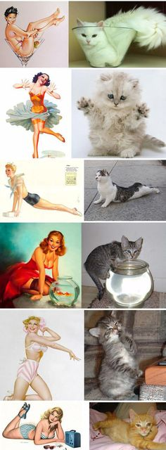 funny-kittens-posing-like-girls