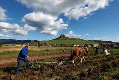 Slovak farmer