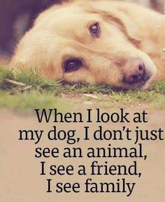 I Love Dogs, Puppy Love, Pet Dogs, Dogs And Puppies, Animals And Pets, Cute Animals, Dog Quotes Love, Pet Quotes, Animal Quotes