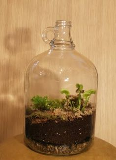 terrarium:  Every home needs one of these!