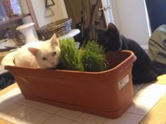 Phantom: I'm gonna sit here and watch the grass grow  Emerald: Look at this fool over here  Lol
