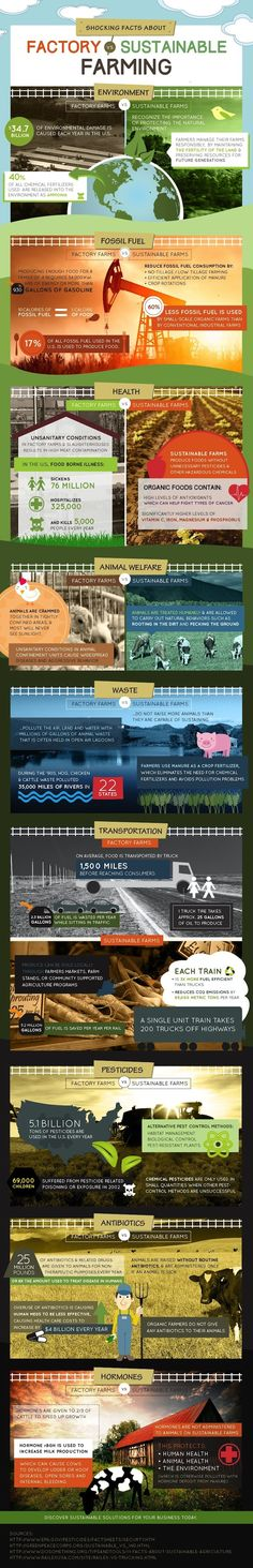 Factory Farming vs Sustainable Farming Infographic: http://www.greenerideal.com/science/0922-factory-farming-vs-sustainable-farming-infographic/
