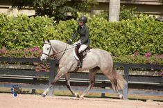 Cute Ponies, Dream Barn, Hunter Jumper, Horse Care, Horse Stuff, Horse Riding, Dressage, Beautiful Horses, Farm Life