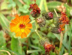 mysterious flower