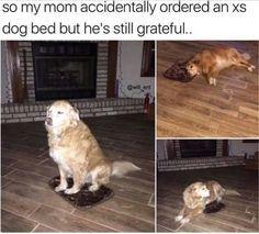 This good boy: