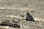 Un iguane, des serpents, et une géniale scène d'action