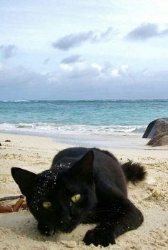 Black cat goes to the beach! :)