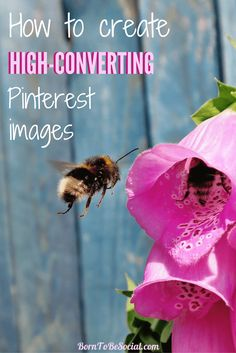 How to create high-converting images Content Marketing, Affiliate Marketing, Social Media Marketing, Image Pinterest, Wild Bees, Marketing Consultant, Pinterest For Business, Start Up Business, Business Ideas