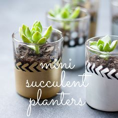 Happy Saturday. Today I have a pretty mini succulent planter DIY for you that is so versatile...you can use it as a place card holder for your elegant dinner, scatter them as a centerpiece, use it...
