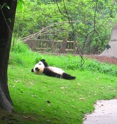 Cloudwatching via the metapicture #Panda