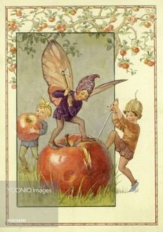 Apple - Illustration from the book 'The Orchard Fairies'..Margaret Tarrant