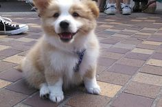 44 Reminders That Corgis Are The Best Part Of The Internet.  I just find them so dang cute!