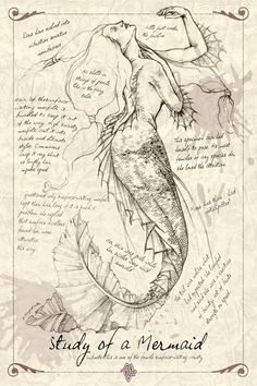 A Study of a Mermaid. Just part of the 'journal' series that I've been doing. Used mermaid stock from lockstock (This may sound like a silly question bu. A Study of a Mermaid Mythological Creatures, Mythical Creatures, Sea Creatures, Mermaid Artwork, Mermaids And Mermen, Drawings Of Mermaids, Art Drawings, Illustration Art, Illustrations