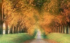 Most Amazing Tree Tunnels in the world ~ Islamic Republic of Pakistan
