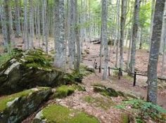 Orto Botanico Forestale dell'ABETONE