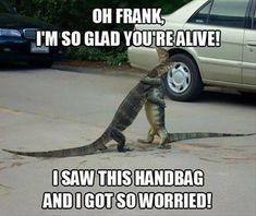 Funny Memes & Pics of Hilarious Random Humor. Daily Funny Memes And Pictures Release . Funny Animal Memes, Cute Funny Animals, Funny Animal Pictures, Funny Cute, Funny Dogs, The Funny, Funny Lizards, Humorous Animals, Funny Puppies