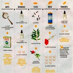 Chart to get rid of:  Ants, Bedbugs, Flies, Mice, and Roaches...