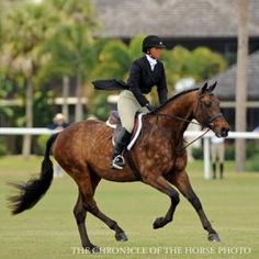 Check out those DAPPLES! Read tips on how to get your horse's coat horse-show-ready... then find the tools you need at Round Two!