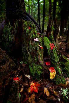 Autumn Forest Floor - Acadia National Park, Maine