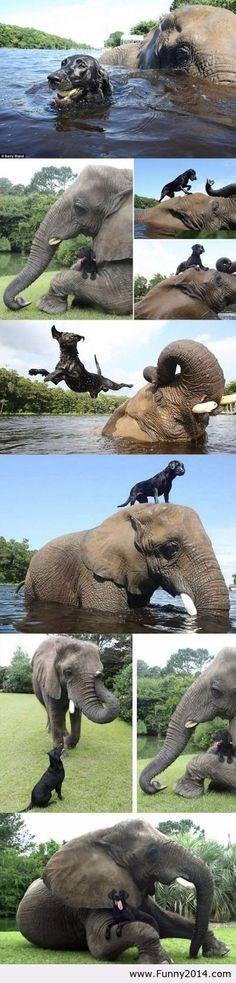 Best friends level animals