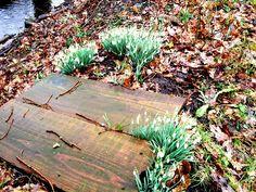 #Geschichten Alle hatten gedacht, der Frühling habe bereits begonnen. Tulpen und Narzissen hatten bereits ihre grünen Nasen aus der dunklen Erde gestreckt, um sich von der Sonne streicheln zu  lassen . Die Schneeglöckchen und Märzenbecher nickten leise im Wind, als an diesem besonderen Morgen im Februar der Winter noch einmal zurückkehrte...