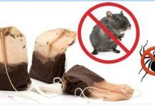 Get Rid of Mice and Spiders Permanently Using This Simple Method