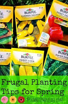 Frugal Planting Tips For Spring   vegetable garden  cheap garden   organic gardening   compost   seed starting   save money in the garden