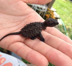Common Snapping Turtle, Alligator Snapping Turtle, Cute Reptiles, Reptiles And Amphibians, Cute Turtles, Baby Turtles, Cute Baby Animals, Animals And Pets, Funny Animals