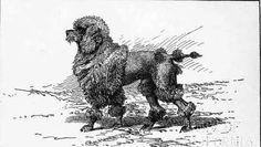 Rufus  (1891)