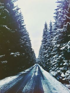 forest road in the snow location: Czech Republic