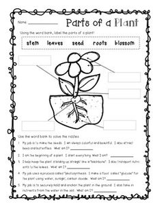 plant parts differentiated instruction tiered worksheets hipolita parts of a plant. Black Bedroom Furniture Sets. Home Design Ideas