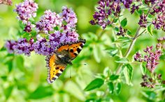 Our gardens are home to a huge range of living creatures, and they play a very important role pollinating our plants.  Unfortunately, their numbers are dropping around the world, thanks to a pesticide use and a loss of their natural habitats.  But insect activity is great for the whole garden ecosystem. If you help them, they will