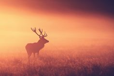 split tone stag by Mark Bridger, via 500px